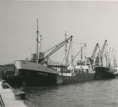 "Photograph showing ships ""Fivelstad"", ""Parnass"", Blyth Harbour, Blyth, Northumberland."